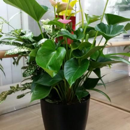 観葉植物(ミックス)