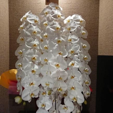 京都祇園の炭火焼肉店 開店お祝い花