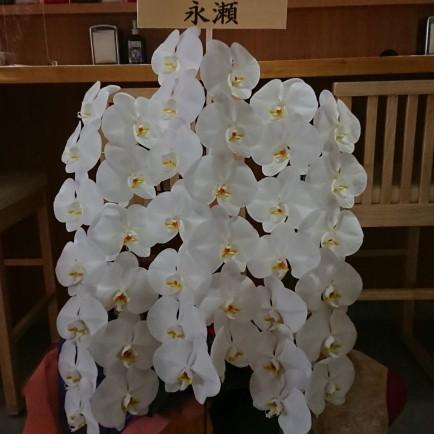 東大阪市へイタリアンレストラン開店お祝いの胡蝶蘭